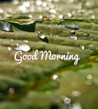 Winter Good Morning Hd Wallpaper Download Good Morning Winter Season 826x921 Download Hd Wallpaper Wallpapertip