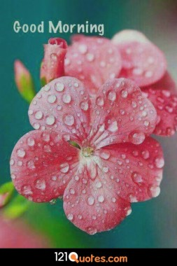 Good Morning Wallpaper With Pink Flower In Hd Flowers With Dew Drops 735x1102 Download Hd Wallpaper Wallpapertip