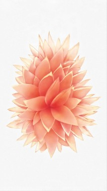 10 108133 iphone 6s rose gold wallpaper iphone 5 se