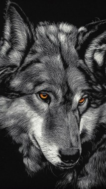 Black Wolf Wallpaper Iphone 444x794 Download Hd Wallpaper Wallpapertip