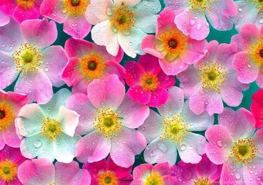 Bunga Cantik 643x429 Download Hd Wallpaper Wallpapertip