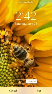 Sunflower Iphone Wallpapers Free Sunflower Iphone Wallpaper Download Wallpapertip