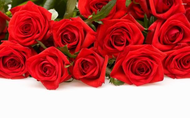 Red Rose Wallpapers, free Red Rose Wallpaper Download - WallpaperTip