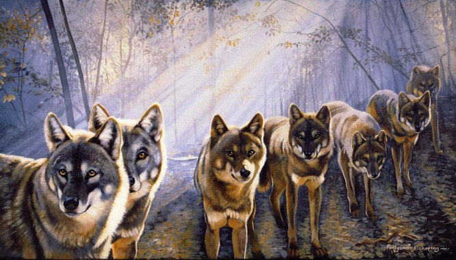 Anime Wolf Wallpaper Anime Wallpaper Wolf Pack 1937x1104 Download Hd Wallpaper Wallpapertip