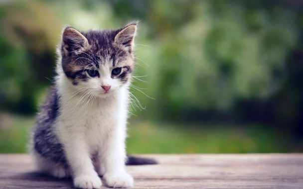 2880x1800 Baby Cat Wallpapers Mobile Data Id Data Baby Cat Hd 2880x1800 Download Hd Wallpaper Wallpapertip