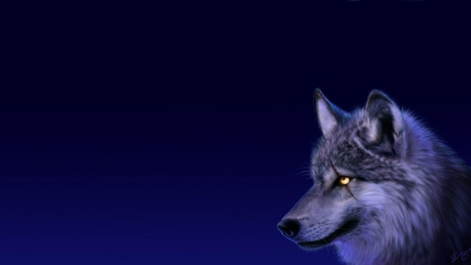 Anime Wolf Wallpapers Free Anime Wolf Wallpaper Download Wallpapertip