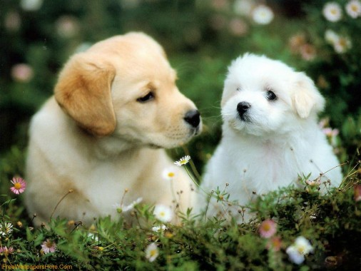 Beautiful Puppies Dogs Cute Puppy 1600x1200 Download Hd Wallpaper Wallpapertip