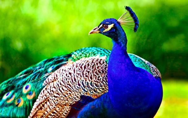 Birds Beautiful Image Download 1600x1000 Download Hd Wallpaper Wallpapertip