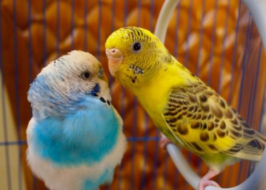 Love Birds Wallpapers Download Free Love Birds Hd Wallpapers 1024x768 Download Hd Wallpaper Wallpapertip