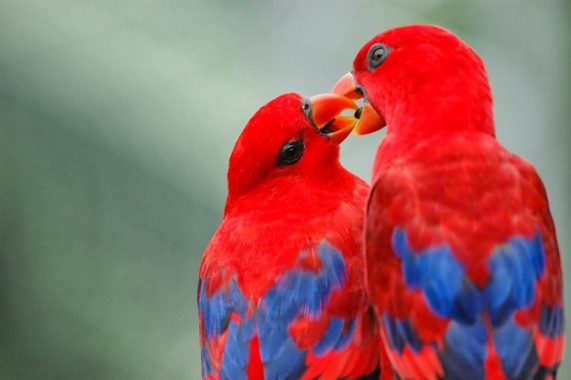 Love Birds Hd Wallpapers Download 1600x1200 Download Hd Wallpaper Wallpapertip