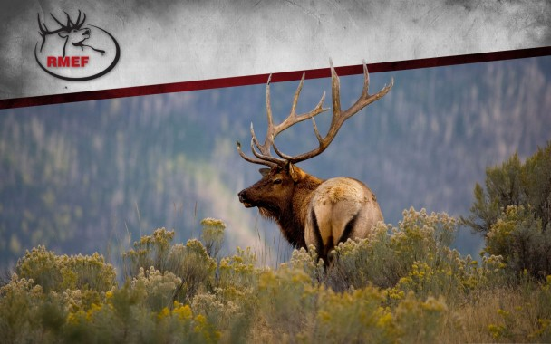 451ds85 Elk Wallpaper For Computer Px Rocky Mountain Hunting 1920x1200 Download Hd Wallpaper Wallpapertip