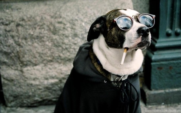 Funny Dog Wallpapers Hd Best Hd Desktop Wallpapers Dog Having A Cigarette 1680x1050 Download Hd Wallpaper Wallpapertip