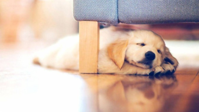 Dog Wallpaper Cute By On Live Apps Android Golden Retriever Dog Wallpaper Puppy 1024x576 Download Hd Wallpaper Wallpapertip
