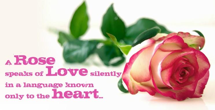 Love Rose And Jack Titanic 1600x900 Download Hd Wallpaper Wallpapertip
