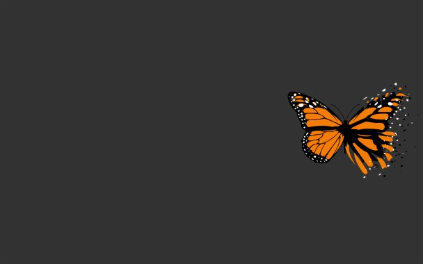 Orange And Black Butterfly With Simple Grey Background Monarch Butterfly 1920x1200 Download Hd Wallpaper Wallpapertip