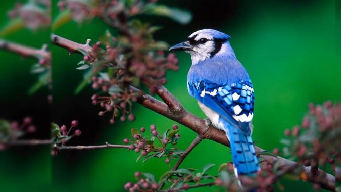 Most Beautiful Birds Hd Wallpapers Hd Wallpapers Download Beautiful Birds Pics World Hd 2560x1600 Download Hd Wallpaper Wallpapertip