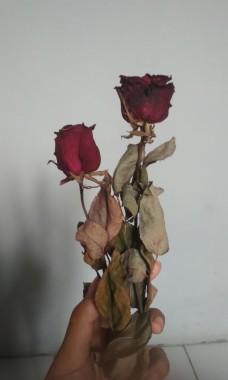 Bunga Mawar Kering 1560607752 72cf05ab Progressive Bunga Layu 648x1080 Download Hd Wallpaper Wallpapertip