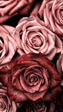 Rose Gold Aesthetic Background 1097x1903 Download Hd Wallpaper Wallpapertip