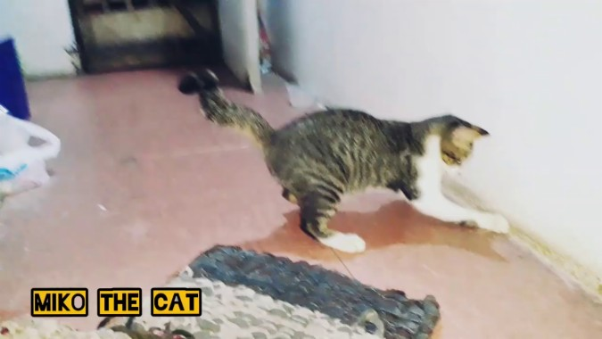 Wallpaper Kucing Lucu Bergerak Gif 1280x720 Download Hd Wallpaper Wallpapertip