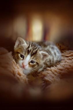 Kitten Animal Cute Cat Baby Baby Cat Small Cats 910x1365 Download Hd Wallpaper Wallpapertip