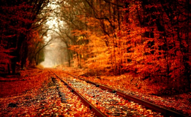 25 253616 hello kelle tumblr fall backgrounds autumn leaves desktop