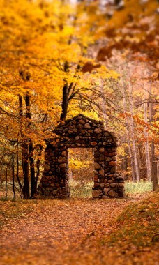 Autumn Wallpapers Free App Download For Android Autumn Pictures Of Forests 480x800 Download Hd Wallpaper Wallpapertip