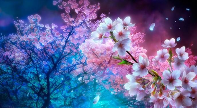 568504 Title Earth Sakura Cherry Tree Cherry Blossom Cherry Blossom Tree Background Hd 3840x2160 Download Hd Wallpaper Wallpapertip