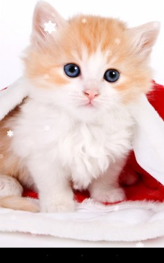 Iphone 6 Cute Cat Wallpaper Hd 562x900 Download Hd Wallpaper Wallpapertip