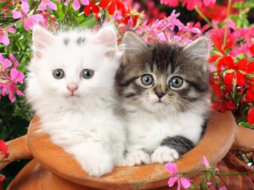 Cat Hd Wallpapers Free Cat Hd Wallpaper Download Wallpapertip