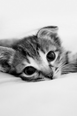 Cat Iphone Wallpaper Kittens Facebook Cover 750x1334 Download Hd Wallpaper Wallpapertip