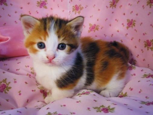 Cute Cat Wallpapers Free Cute Cat Wallpaper Download Page 2 Wallpapertip