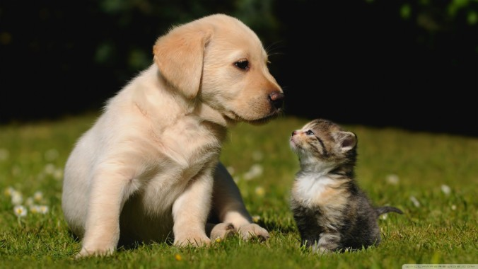 Cat And Dog Cute Wallpaper Cute Puppies Wallpaper Hd 1240x697 Download Hd Wallpaper Wallpapertip