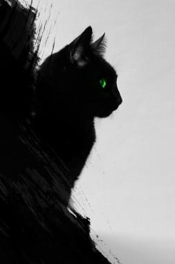 Black Cat Wallpaper Android 640x960 Download Hd Wallpaper Wallpapertip