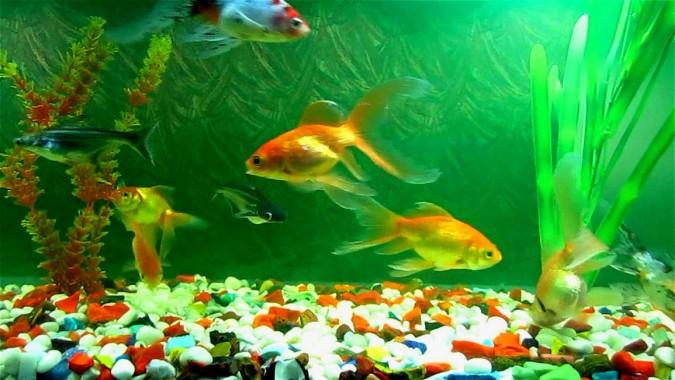 Fond D Ecran Aquarium Hd Fond D Ecran 3d En Direct 1920x1080 Wallpapertip