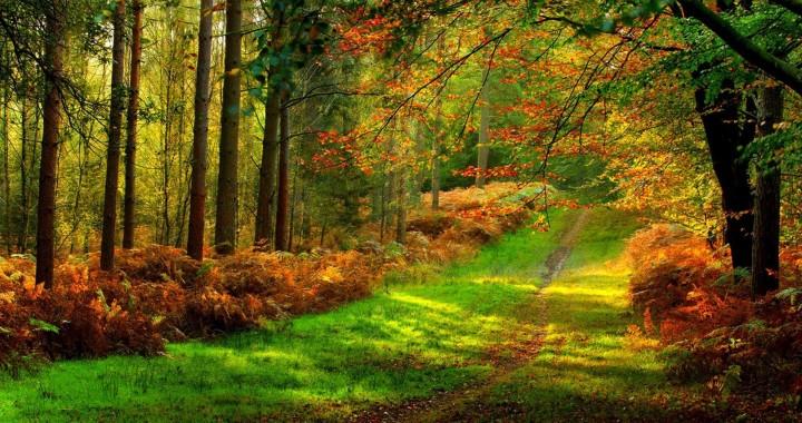 Ultra Hd Forest 4k 4096x2160 Download Hd Wallpaper Wallpapertip