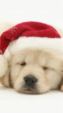 Merry Christmas Dog Iphone Cute Dog Wallpaper Hd 1080x1920 Download Hd Wallpaper Wallpapertip