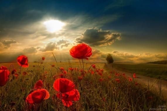 Beautiful Flower Natural Scenery 1600x1200 Download Hd Wallpaper Wallpapertip