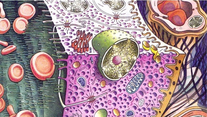 Biology Hd 1422x800 Download Hd Wallpaper Wallpapertip