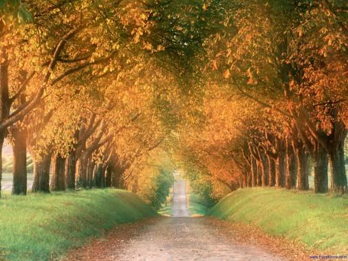 Seasons Autumn Live Wallpaper - Autumn Season Animated ...