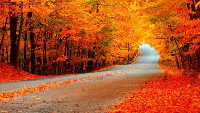Free Hd Fall Desktop Wallpaper Fall Hd Background 2560x1440 Download Hd Wallpaper Wallpapertip
