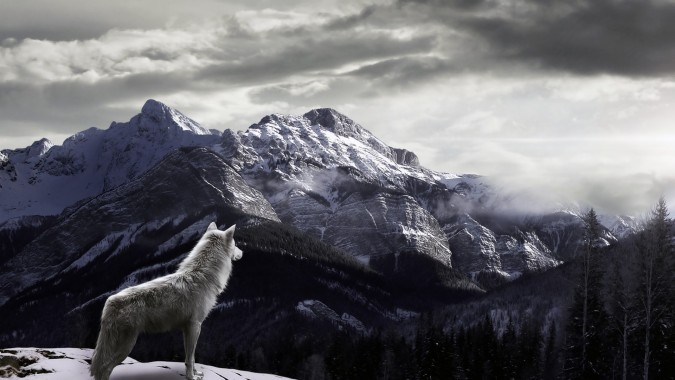 60 604597 howling wolf wallpapers wallpaper data src wolf on