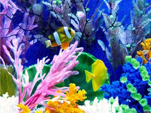Wallpaper Pemandangan Bawah Laut Pemandangan Bawah Laut Yg Indah 1024x768 Download Hd Wallpaper Wallpapertip