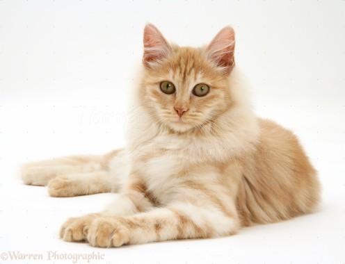 Kucing 2048x1536 Download Hd Wallpaper Wallpapertip