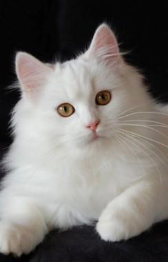 Kucing Lucu Wallpapers Free Kucing Lucu Wallpaper Download Wallpapertip