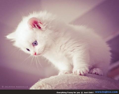 63 631854 wallpaper kucing lucu hd