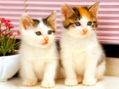 63 631864 kumpulan gambar kucing lucu imut