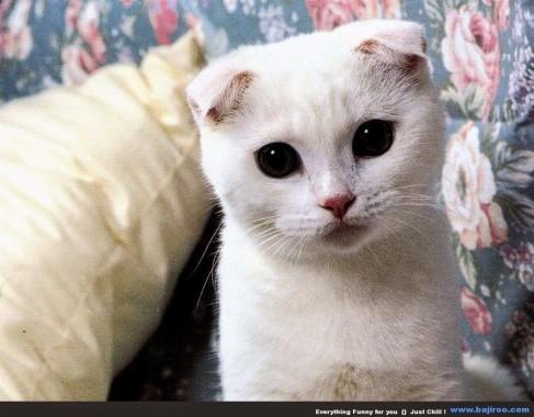 Wallpaper Kucing Imut 1024x680 Download Hd Wallpaper Wallpapertip