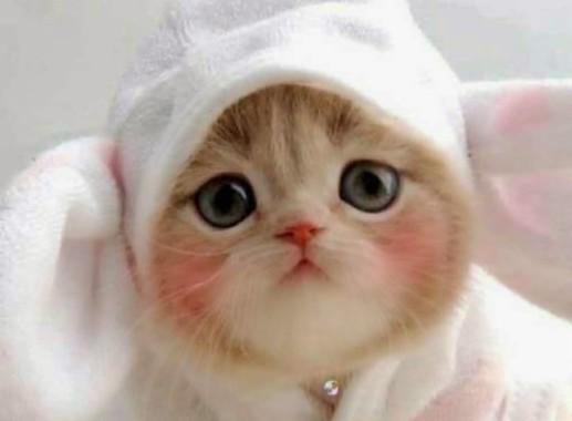 63 631910 kucing lucu bebes gatos gordos tiernos