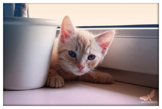 63 632970 100 wallpaper kucing lucu dan el kualitas hd