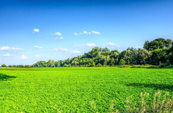 gambar padang rumput hijau 960x624 download hd wallpaper wallpapertip gambar padang rumput hijau 960x624